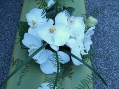Phylanopsis Wedding Aug 08 (1)