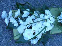 Phylanopsis Wedding Aug 08 (3)