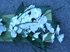 Phylanopsis Wedding Aug 08
