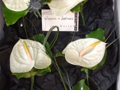 Anthurium Wedding Aug 06 (3)