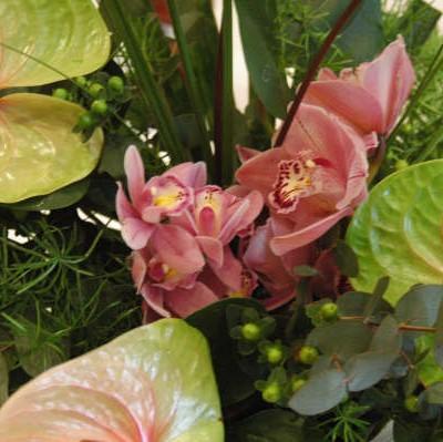 Orchid – Anthurium – Sue Forth